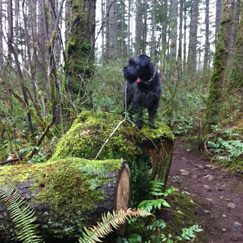 cleo_standing_on_tree_stump_640x640
